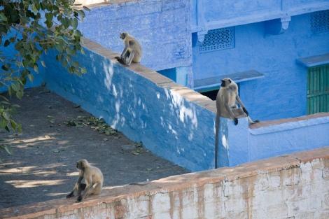 Jodhpur by Garrett Ziegler