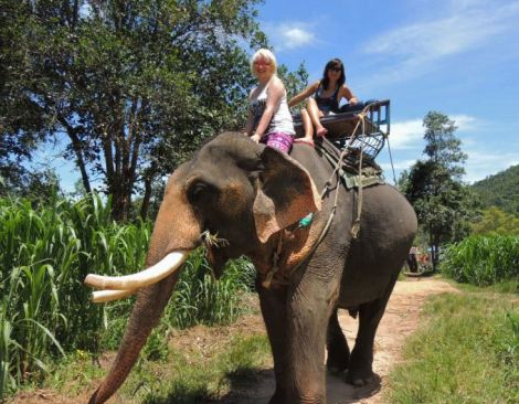 Elephant riding in Koh Samui
