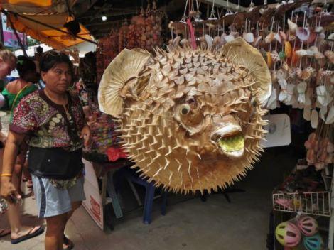 Spiky puffer fish in Koh Samui market