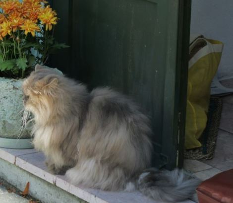 Fluffy cat sitting on step