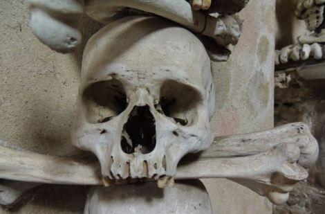 Human skull in ossuary