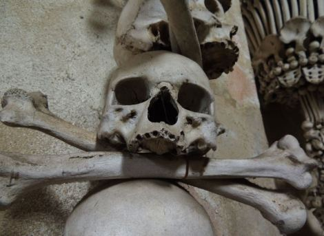 Sedlec Ossuary Large Skull